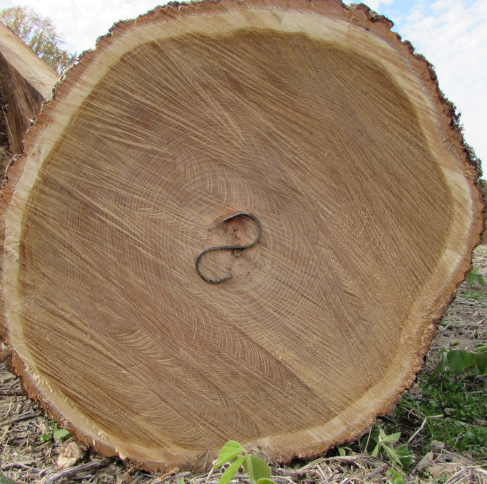 Sell My Timber Auburn Alabama,